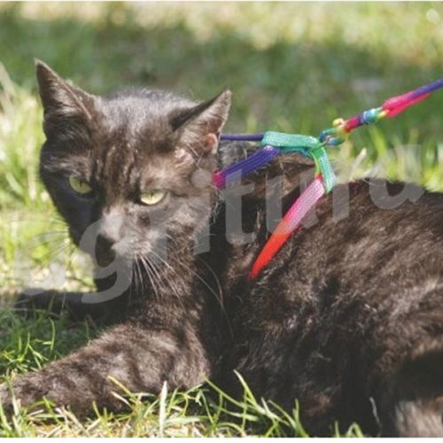 Gatti Harness Rainbow