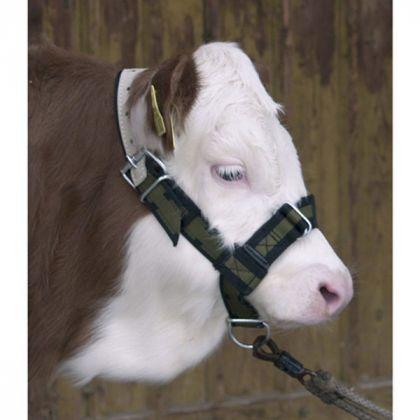 Capezza per Le Mucche