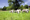 EasyNet Per Recinzione Pecore Con Altezza Da Terra