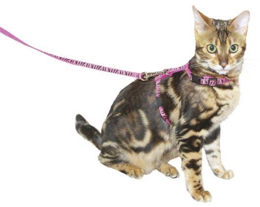imbracatura gatto con guinzaglio